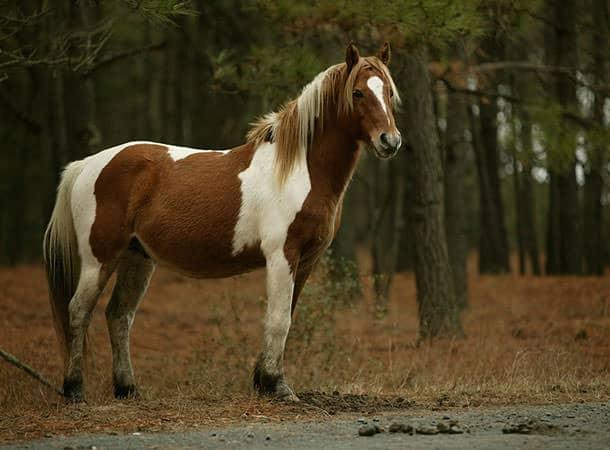 Pony-Wild-1