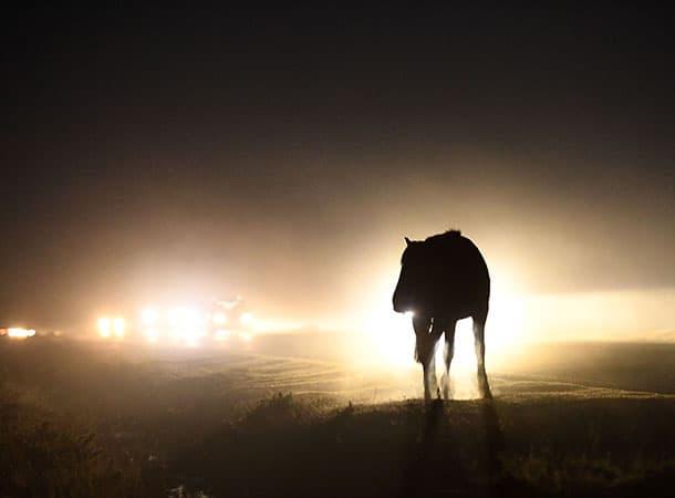 animal accidents - PONIES-@-NIGHT-Robert-Sach